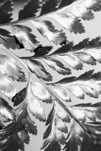 Leaf Plaid Inspiration Photo